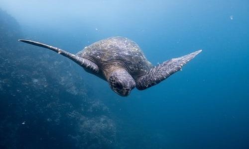 Paque Turistico Isla Galapagos