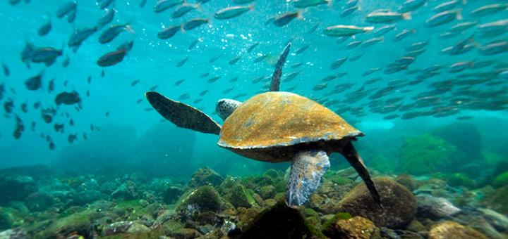 aventura bajo el agua