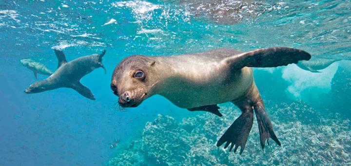 vida silvestre en islas galapagos
