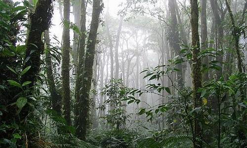 monte-verde-costa-rica