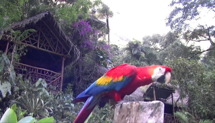 selva-central-turismo