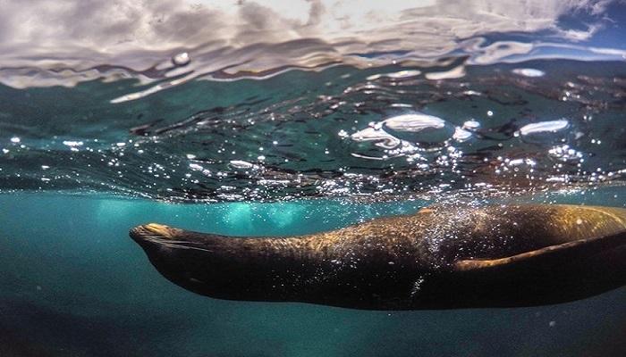Paquete Isla Galapagos